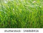 Green Summer Shining Grass In...