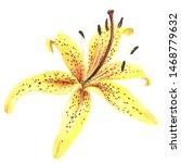 Elegant Lily  Yellow Lily...
