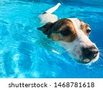 Close Up Of Dog Swimming