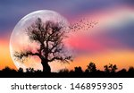 Silhouette Of Birds With Lone...