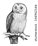 owl hand drawn  black and white ... | Shutterstock .eps vector #146962166