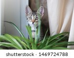 Stock photo cat on the white window with grass in a pot kitten play and surprise eating smelling home plants 1469724788