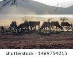 Common Duiker  Mountain Zebra ...