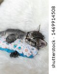 Stock photo cat sleeping hugging a pillow with planet design in a white fluffy background 1469914508