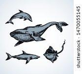 big atlantic flipper baleen...   Shutterstock .eps vector #1470055145