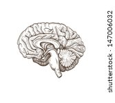 brain hand drawn isolated on a... | Shutterstock .eps vector #147006032