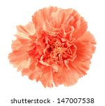 An Orange Carnation Isolated O...
