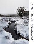 Snow along the Allyn river, Barrington Tops National Park, NSW, Australia