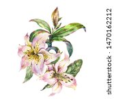 white lily  watercolor royal... | Shutterstock . vector #1470162212