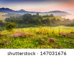 savory flowers in dew on the meadow in the mountains of the cool early morning - stock photo