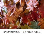 autumn multicolor maple leaves...   Shutterstock . vector #1470347318