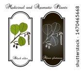 black or european alder  alnus... | Shutterstock .eps vector #1470465668