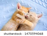 Stock photo baby cat sleeping ginger kitten on couch under knitted blanket two cats cuddling and hugging 1470594068