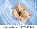 Stock photo baby cat sleeping ginger kitten on couch under knitted blanket two cats cuddling and hugging 1470599465