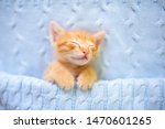 Stock photo baby cat sleeping ginger kitten on couch under knitted blanket domestic animal sleep and cozy 1470601265