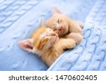 Stock photo baby cat sleeping ginger kitten on couch under knitted blanket two cats cuddling and hugging 1470602405