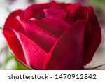 Small photo of Red rose close-up shot at aleatory flower shop. Macro photography did on february, 14, 2016.
