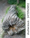 Small photo of Twisted denuded weathered log laying on the ground