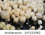 close up of a group of small... | Shutterstock . vector #147121982