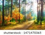 Scenery Autumn Forest. Sunny...