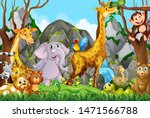Many Cute Animals In The Forest ...