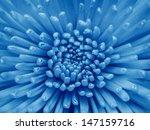 flower | Shutterstock . vector #147159716