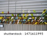 Many colorful Parakeets hanging out with each other at Timbavati Wildlife Park in Wisconsin Dells, Wisconsin