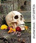 Skull Ceramic