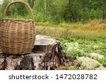 Wicker Basket On The Forest ...