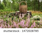 Summer Background With Wicker...