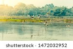 Stock photo flock of migratory birds flying over lake the freshwater and coastal bird species spotted in 1472032952