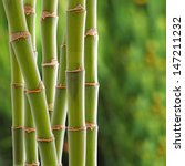beautiful fresh green bamboo... | Shutterstock . vector #147211232