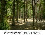 daylight floats among the trees ... | Shutterstock . vector #1472176982