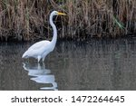 Egret At Bombay Hook National...