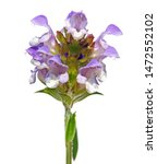 Small photo of Flower of self-heal or heal-all isolated on white background. Prunella vulgaris