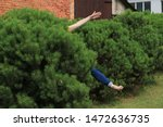 hide and seek in green bushes | Shutterstock . vector #1472636735