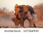 large african elephant ... | Shutterstock . vector #147266945