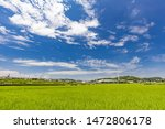Paddy Field In The Suburbs Of...