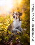 Mix Breed Dog And Autumn Time