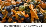Decorative Squash Gourds Seaso...