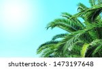 palm tree blue sky with sun... | Shutterstock . vector #1473197648