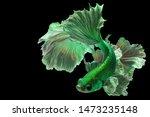 """Bright Green Betta Fish """"fancy..."""