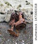 Small photo of Old train wreck, coastal train wreck