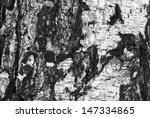 Background Texture Of Birch...