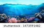 Tropical Coastal Waters....