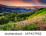 Savory among the grass on the hillside cool early morning - stock photo