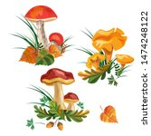 Mushroom Set. Three Kinds Of...