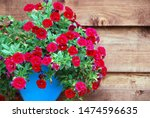 Deep Red Ampelous Mini Petunia...