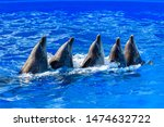 Trained dolphins in dolphinariums. show with dolphins.