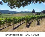 Attractive vineyard in Northern California's Wine Country - stock photo